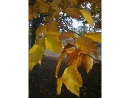 Co nás čeká v nadcházejících podzimních dnech