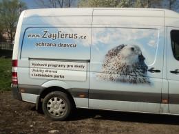 Zayferus