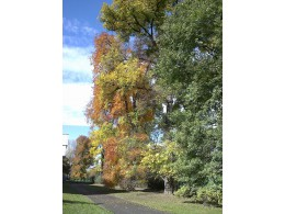 Všechny barvy podzimu