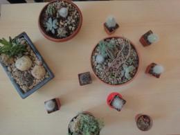 Kaktusový ráj