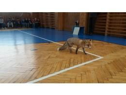 Liška Mia