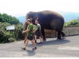 Slon na procházce