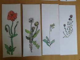 Náš kreslený herbář