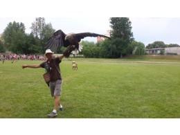 Ukázka dravých ptáků