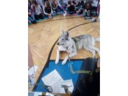 Kdo chce s vlky výti...